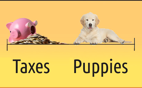 webb billboard referring to taxes and puppies