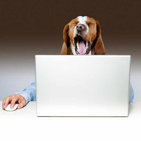 dog yawning at laptop because a website's download speed is slow