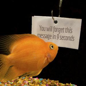 Columbus Ohio web design firm s sows goldfish reading sign