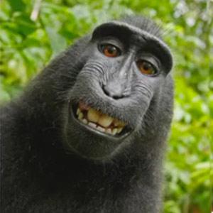 selfie taken by a monkey in the Indonesian forest